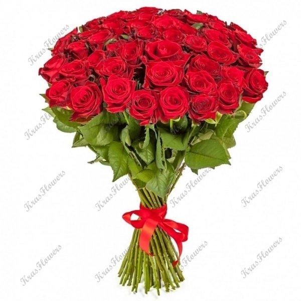 Розы 50-60см