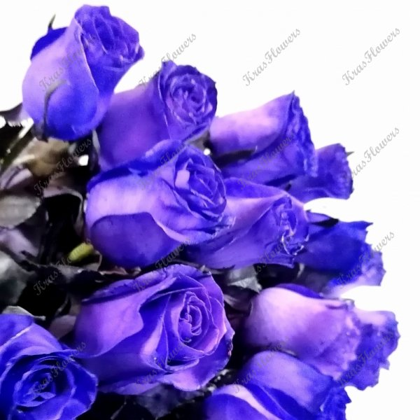 Роза фиолетовая