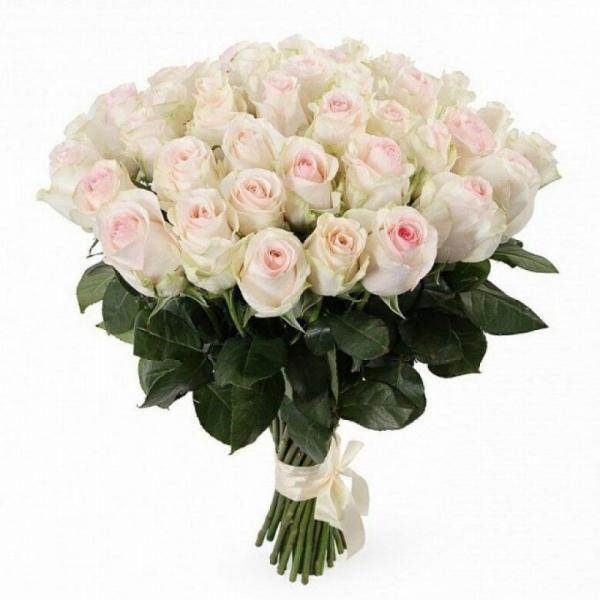 35 роз Альба