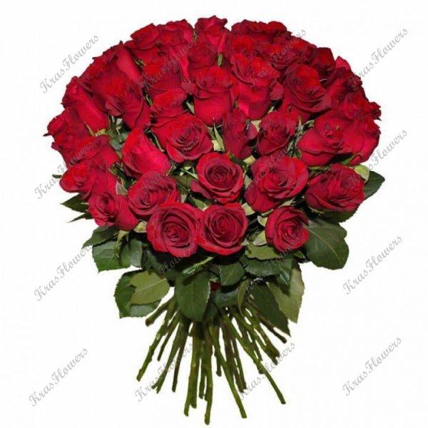 51 красная роза Кения 60см