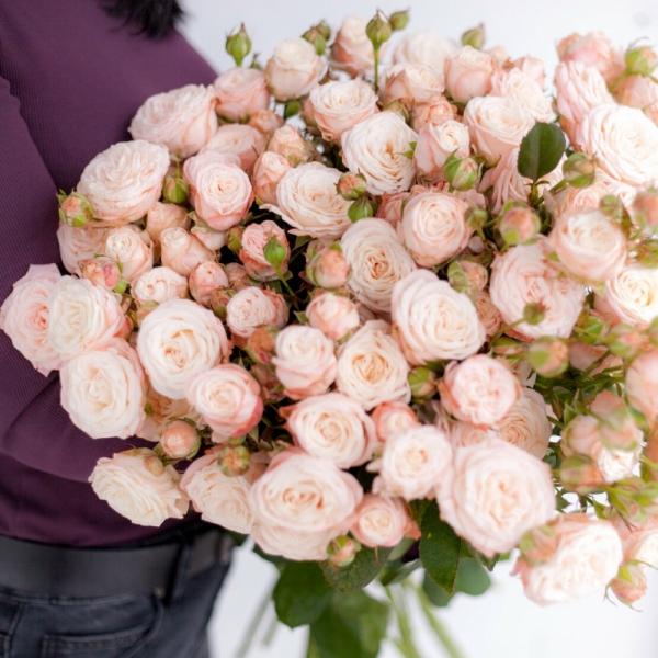 Кустовая роза Бомбастик