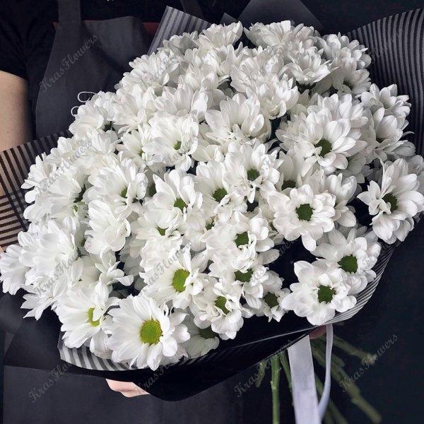 Хризантема ромашки