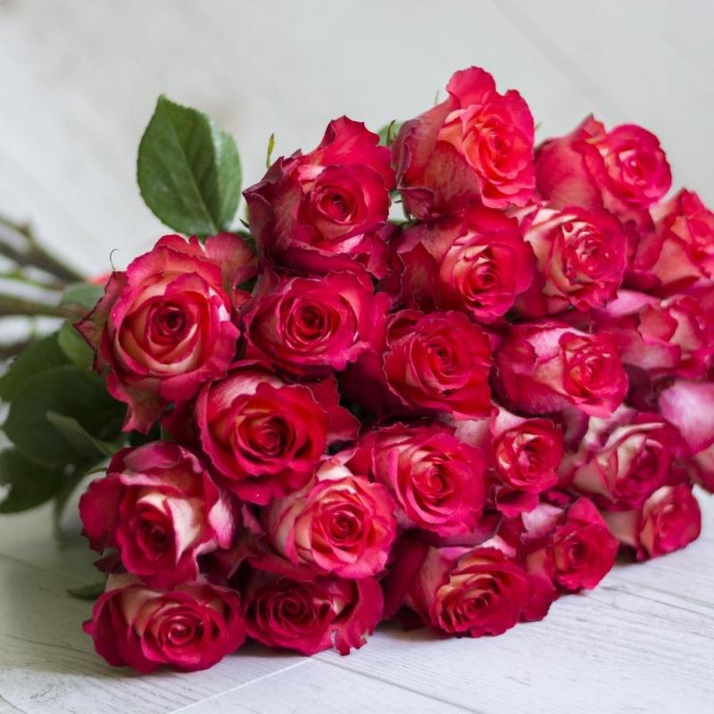 29 роз сорта Игуазу