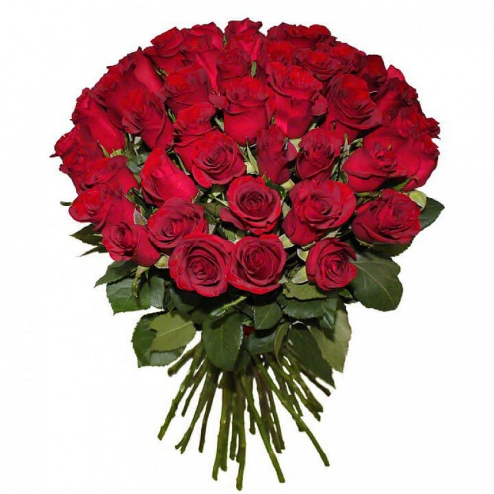 51 красная роза Кения 50см